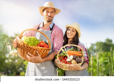 Happy team farmers with their organic product in wooden basket at rural farm.
