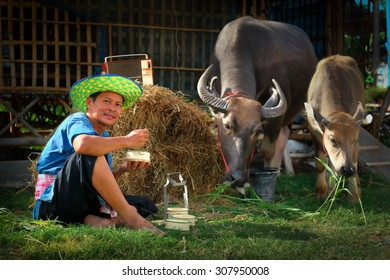 A happy Thai farmer have lunch with his buffalo.