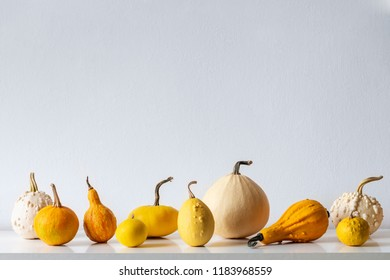 Happy Thanksgiving Background. Selection of various pumpkins on white shelf against white wall. Modern minimal autumn inspired room decoration.