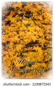 Happy Thanksgiving card with greeting text and border.