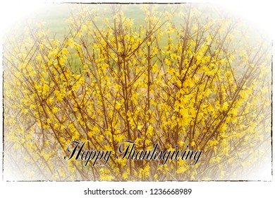Happy Thanksgiving holiday greeting card with text and border for the special day