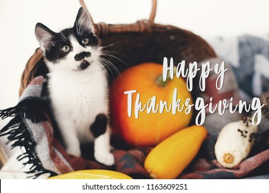 Happy Thanksgiving text, seasons greeting card. Thanksgiving sign. Cute kitty, pumpkin, wicker basket on wooden background. Cat and autumn vegetables
