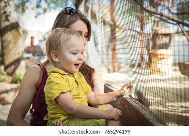 happy toddler boy and his young mother looking at animal at zoo.
