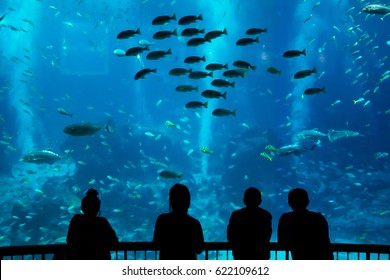 Happy traveller watching fish in aquarium