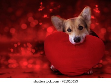 Happy Valentine's Day, my love. Lovely loving dog with a red heart.