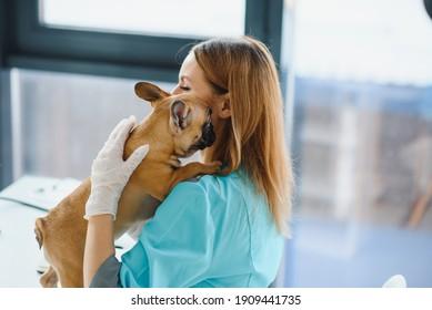 Happy veterinarian doctor hugs puppy in vet clinic. Empty space for text