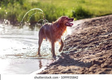 Happy wet dog playing on the beach
