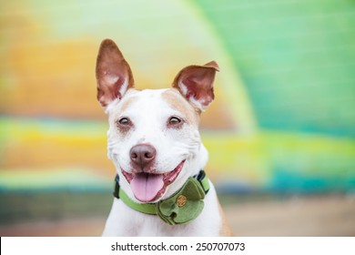 Happy white pit bull dog smiles outside in front of a green and yellow painted wall mural