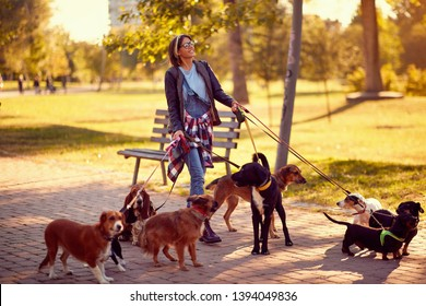 Happy woman dog walker with dogs enjoying in funny walking outdoors.