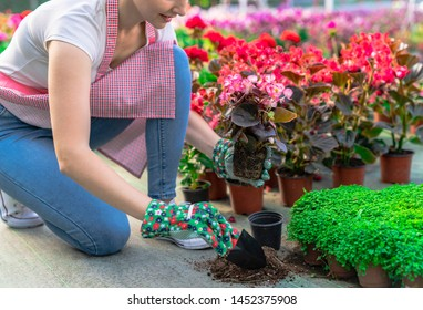 happy woman gardener with flowers. woman care of flowers in garden or greenhouse. gardener is happy for results. gardening is my passion.