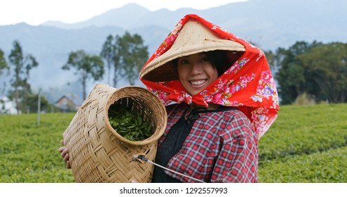 Happy woman holding harvest of green tea