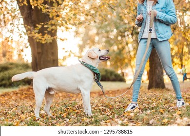 Happy woman training dog labrador in the park.