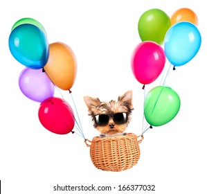 happy yorkie toy flying in a basket with air balloons