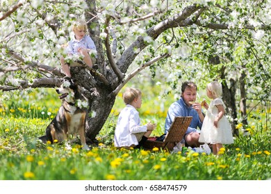 A happy young, American family and their pet German Shepherd dog are sitting outside under the flowering apple trees in an orchard, enjoying a picnic lunch and cookies on Father's day.