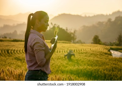 Happy Young Asian farmer or agronomist standing in Beauty Golden ripe wheat field in spring. Using digital tablet. Modern internet communication quality test checking survey technologies Concept.