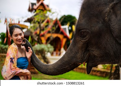 happy young Asian woman or Cheerful Tourist girls playing with elephant. Concept of Art and culture or travel, Asia. Asian woman model