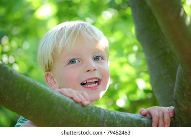 Happy young boy sitting in a tree
