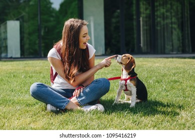 Happy young brunette woman sitting with cute little beagle puppy on the green grass lawn outdoors. Beautiful girl playing with beagle dog and touching his nose