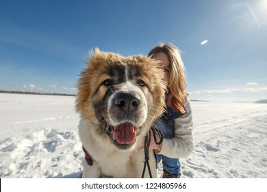 Happy young Caucasian Shepherd dog and her owner are hugging in winter time in park.