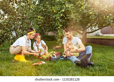 The happy young family during picking apples in a garden outdoors. Love, family, lifestyle, harvest concept. Smiling man and woman and two small sisters. Green grass background.