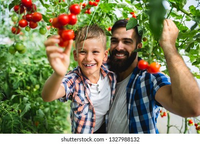 Happy young father with his son harvesting tomatoes in greenhouse.