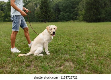 Happy young man walking with dog Labrador outdoors