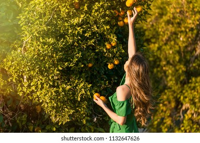 Happy young woman, outdoors at sunset in a orange orchard, smiling and picking oranges. Happiness and healthy lifestyle concept, skin and hair care concept.
