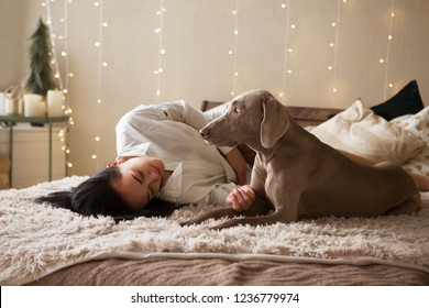 Happy young woman in a pajamas with dog weimaraner lying in bed at home. Winter or christmas weekend concept.