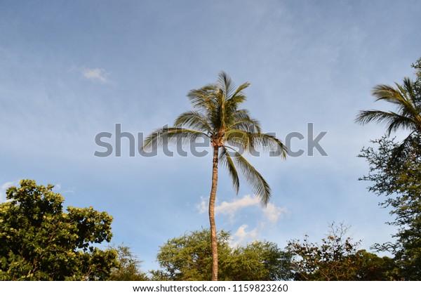 Hapuna Beach State Park Big Island Stock Photo Edit Now