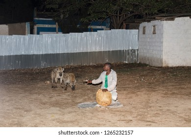 Harar / Ethiopia - May 2017: Wild hyenas being fed at night as a tourist attraction in Harar, Ethiopia.