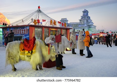 HARBIN,CHINA-JANUARY 30, 2010: Yaks ready for rent at famous Ice & Snow World Festival. Illuminated ice sculptures and structures in background.