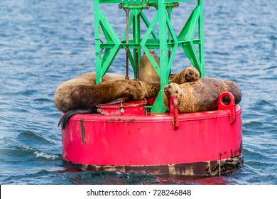 Harbor seals take a nap on a buoy near Juneau, Alaska.