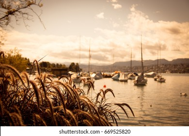 the harbor of zurich with sailing boats and other ships on the waters of lake zurichsee blue sky with clouds and different grasses in the foreground on a sunny day in zurich in switzerland