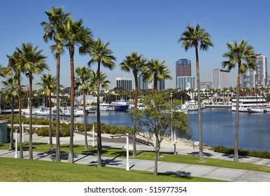 Harbour and Marina in Long Beach with Palm Trees, California at sunrise