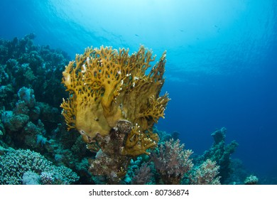 hard coral in reef