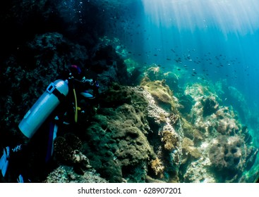 Hard coral Underwater view Small fish Sea figure fish nature  top view holiday Watery dust  blue sea Coral reef  Tropical sea Global warming beam Light shine Diver diving
