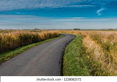 Hard emtpy country road through the colorful meadows of the polders in Uitkerke, Blankenberge, Belgium.