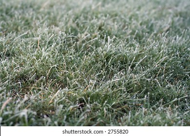 Hard frost on a short grass lawn