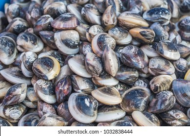 ?Pile of Hard Shell Clams or Asian Hard Clam (Meretrix lusoria), a marine mollusk native to Asia, sold at local fish market. Sea Common Orient Clam aka Hamaguri found in China, Korea, Japan, Thailand