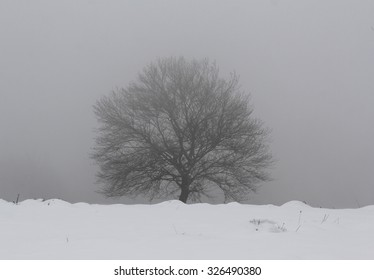 Hard winter with snow storm, isolated single tree and dark sky