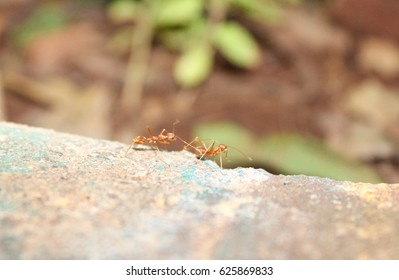 hard working ant