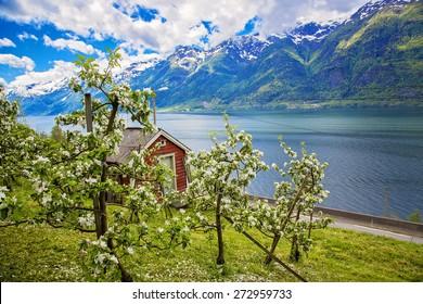 Hardanger fjord in may, Norway
