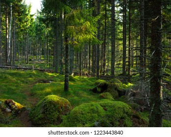 Hardly visible trail on green moss in spruce tree forest, Nature of Sweden, Hiking trail Bruksleden