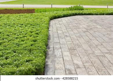 hardwood floors and plant in garden