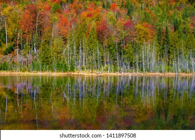 A hardwood forest with brilliant autumn colors is reflected in a small pond near Stowe, VT