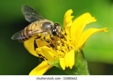 hardworking bee collecting nectar