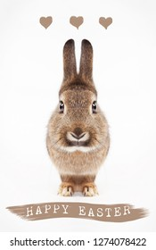 a hare isolated with text happy easter, background white