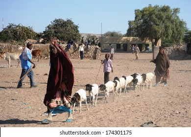 HARGEISA, SOMALIA - JANUARY 8, 2010: Hargeisa - the largest city in Somaliland, the second largest city in Somalia. Livestock is the main occupation of the local population. The livestock market.