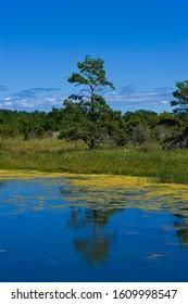 Harilaid Peninsula, Vilsandi National Park, Saaremaa, Baltic Sea Island, Estonia, Baltic States, Northeast Europe