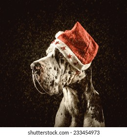 harlequin great dane in form of Santa Claus congratulates merry Christmas and new year